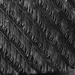 A SEM image of a feather